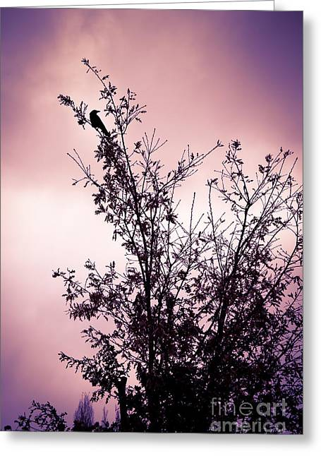 Silhouettes Greeting Cards - July Song Greeting Card by Jan Bickerton