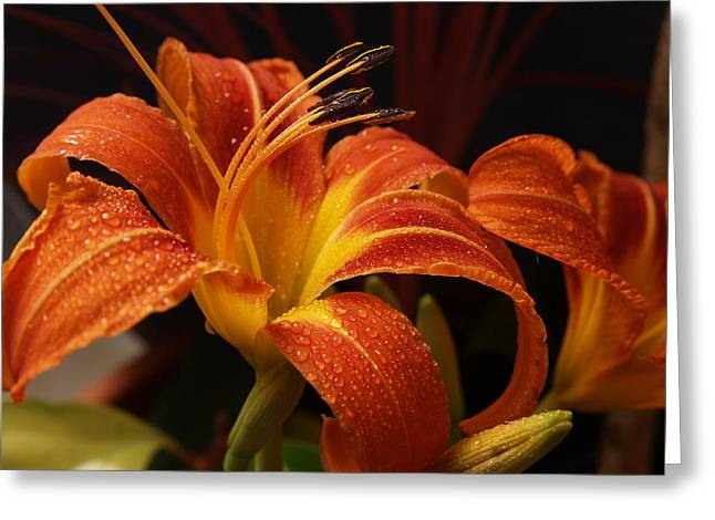 The Tiger Greeting Cards - July Tiger Lily Greeting Card by Dennis Campbell