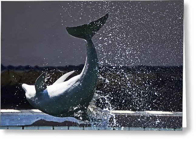Ocean Mammals Greeting Cards - Jumping Dolphin Greeting Card by Pamela Walton