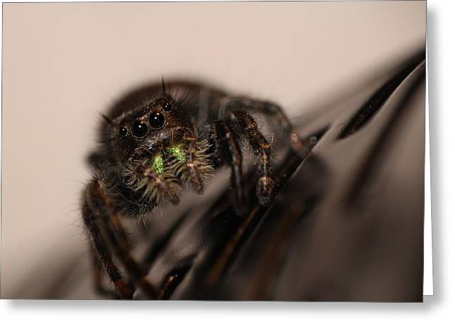 Jumping Spider Greeting Card by Francesco Gonnella