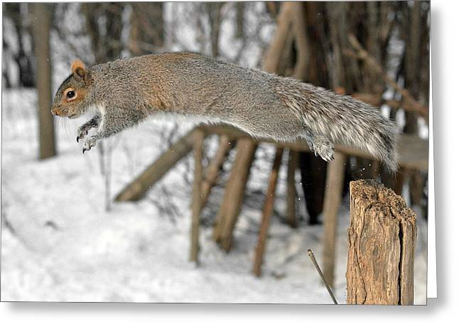 Jumping Squirrel Greeting Card by Asbed Iskedjian