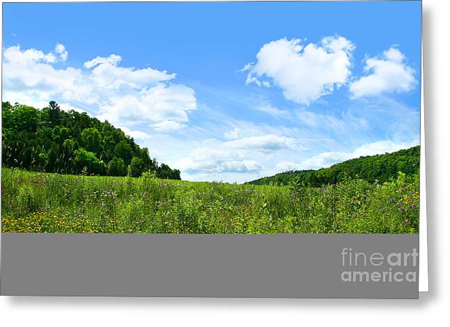Paradise Meadow Greeting Cards - June flowers with bright summer sky Greeting Card by Sandra Cunningham