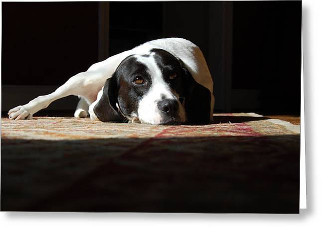 Mut Greeting Cards - Junebug Greeting Card by Robert Meanor
