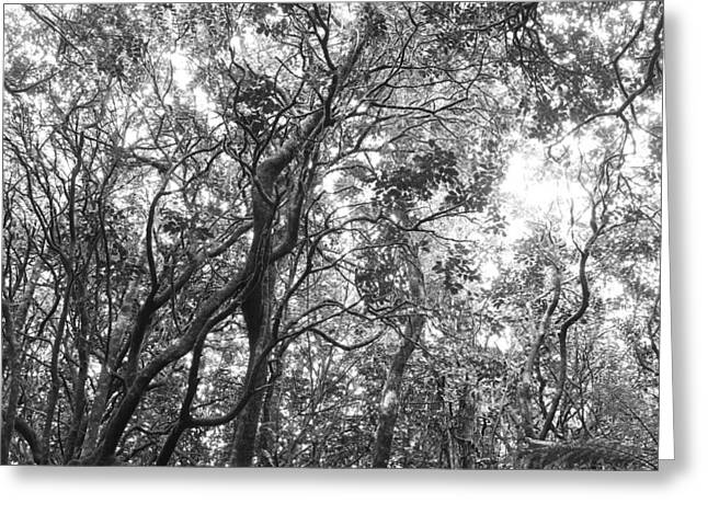 Jungle Canopy Greeting Card by Les Cunliffe