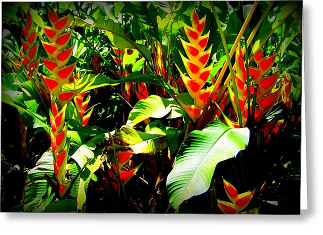 Bract Greeting Cards - Jungle Fever Greeting Card by Karen Wiles