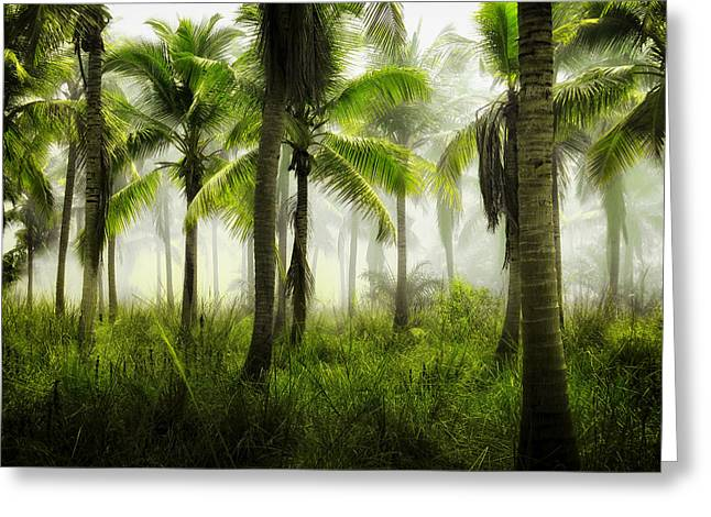 Sweltering Greeting Cards - Jungle Mist Greeting Card by Unsplash
