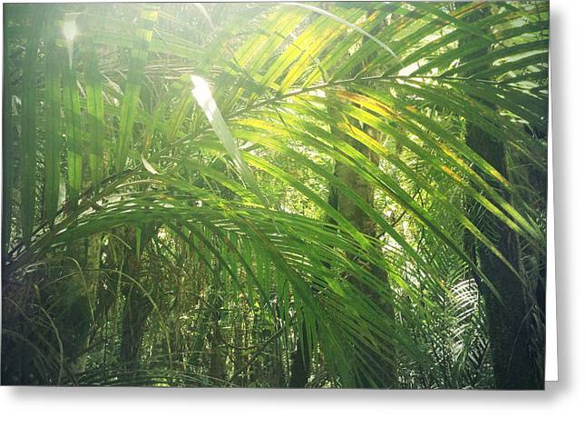 Raining Greeting Cards - Jungle sunlight Greeting Card by Les Cunliffe