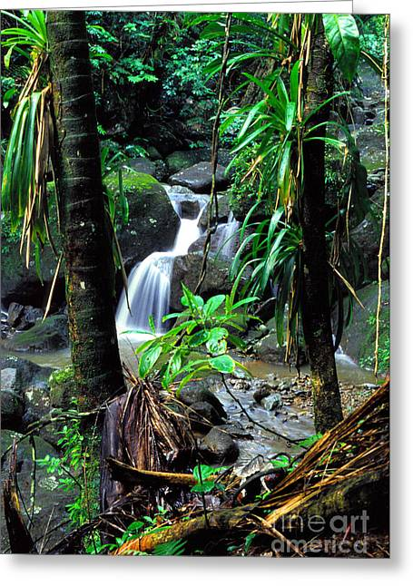 Yunque Greeting Cards - Jungle waterfall Greeting Card by Thomas R Fletcher