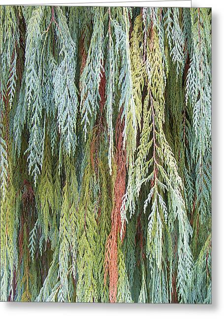 Organic Greeting Cards - Juniper Leaves - Shades Of Green Greeting Card by Ben and Raisa Gertsberg
