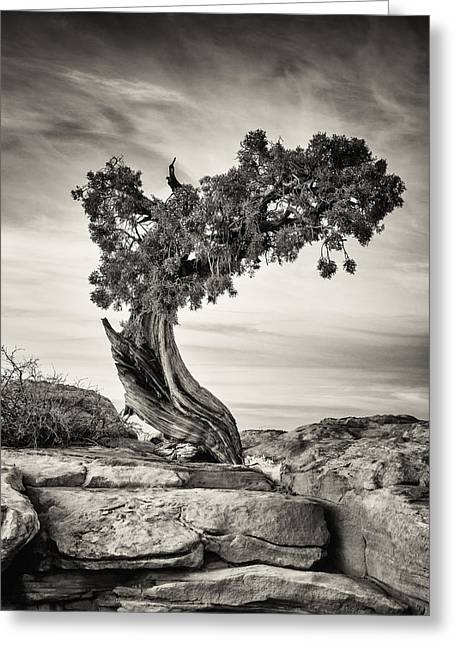 Southern Utah Greeting Cards - Juniper Tree Greeting Card by Stefan Olson