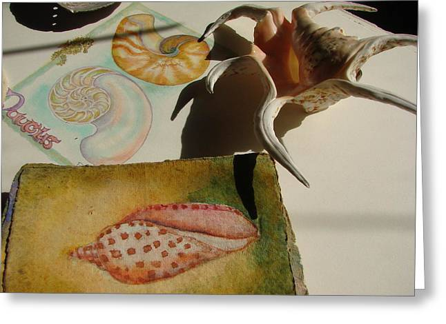 Nautical Pastels Greeting Cards - Junonia Volute Shell Greeting Card by Phyllis OShields