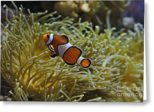 Clown Fish Photographs Greeting Cards - Just A Clown Greeting Card by Rick  Monyahan