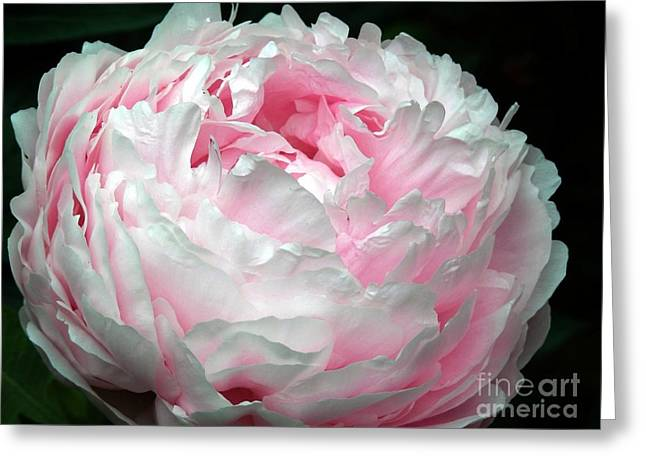 New Greeting Cards - Just A Hint Of Pink Greeting Card by Marcia Lee Jones