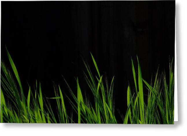 Green Blade Of Grass Greeting Cards - Just A Little Grass Greeting Card by Donna Blackhall