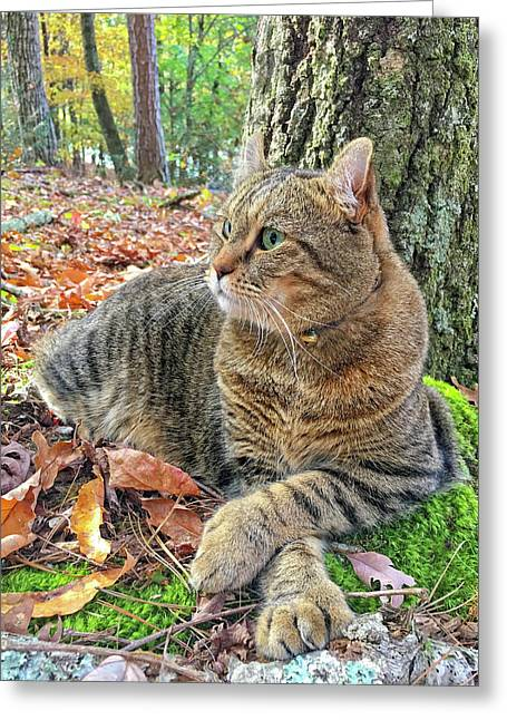 Just Chillin' In The Woods Greeting Card by Susan Leggett