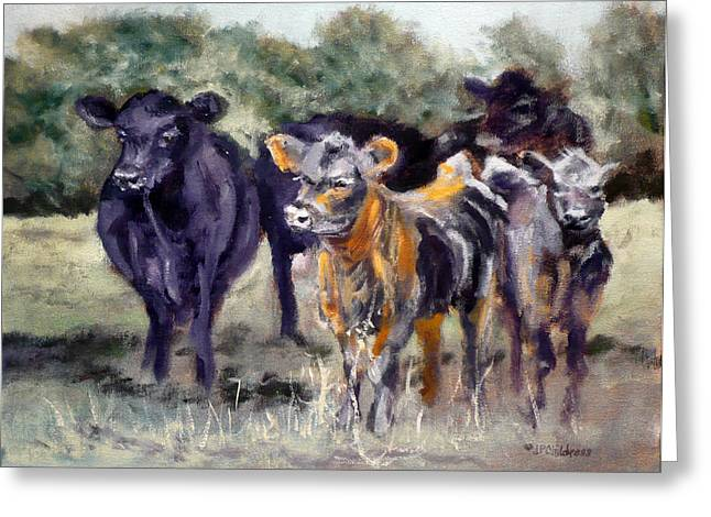 Black Angus Calf Greeting Cards - Just Curious Greeting Card by J P Childress