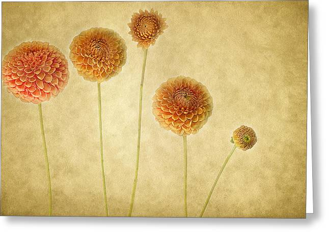 Dahlia Greeting Cards - Just Dahlia-ing Around Greeting Card by Rebecca Cozart