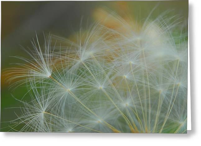 Wishes Greeting Cards - Just Dandy Greeting Card by Donna Blackhall