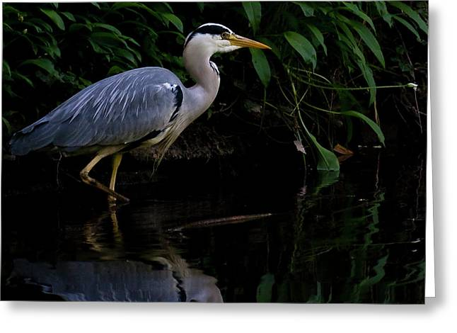 Ardea Greeting Cards - Just Fishing Greeting Card by Brian Roscorla
