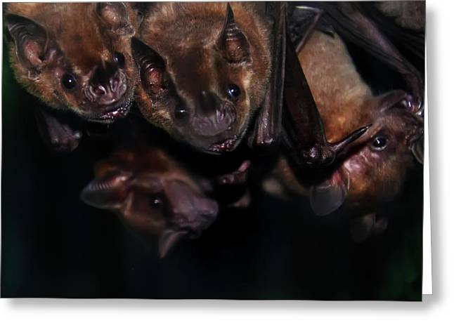 Bat Digital Greeting Cards - Just Hanging Around - Bats Greeting Card by Bill Cannon