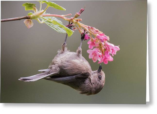 Birds And Flowers Greeting Cards - Just Hanging Around Greeting Card by Angie Vogel