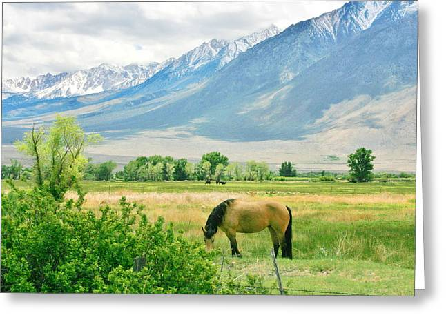 Grazing Snow Greeting Cards - Just Munchin Greeting Card by Marilyn Diaz