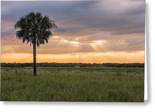 Florida State Parks Greeting Cards - Just my Luck Greeting Card by Jon Glaser