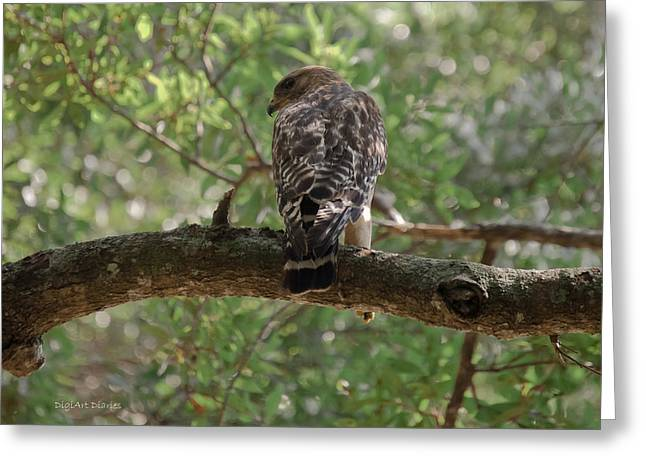 Red Shouldered Hawk Greeting Cards - Just Ready to Attack Greeting Card by DigiArt Diaries by Vicky B Fuller