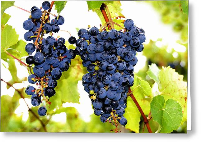 Grape Vines Greeting Cards - Just Ripe Greeting Card by David Lee Thompson