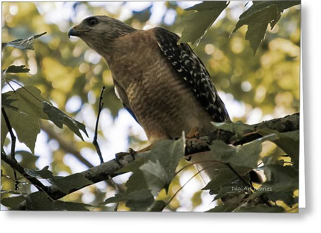 Red Shouldered Hawk Greeting Cards - Just Spotted Dinner Greeting Card by DigiArt Diaries by Vicky B Fuller