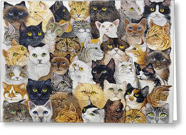 Cute Kitten Drawings Greeting Cards - Just the Cats Whisker Greeting Card by Pat Scott