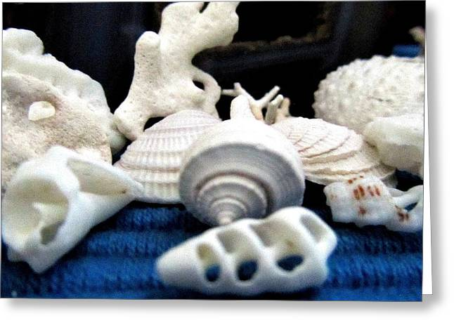 Beach Theme Posters Greeting Cards - Just white Seashell 1 Greeting Card by Danielle  Parent