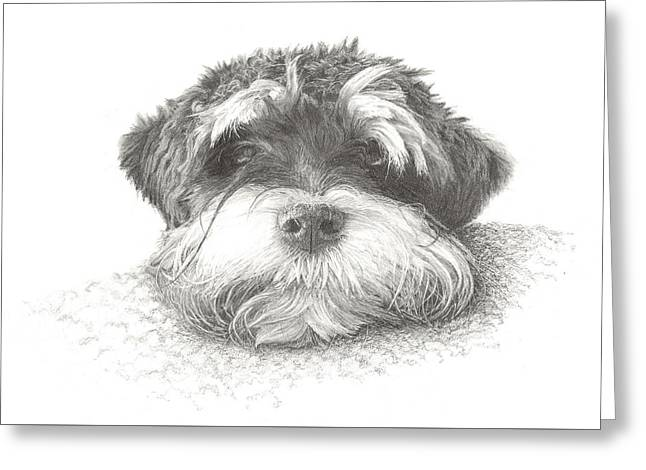 Puppies Drawings Greeting Cards - Just you and me Greeting Card by Lawrence Marshall