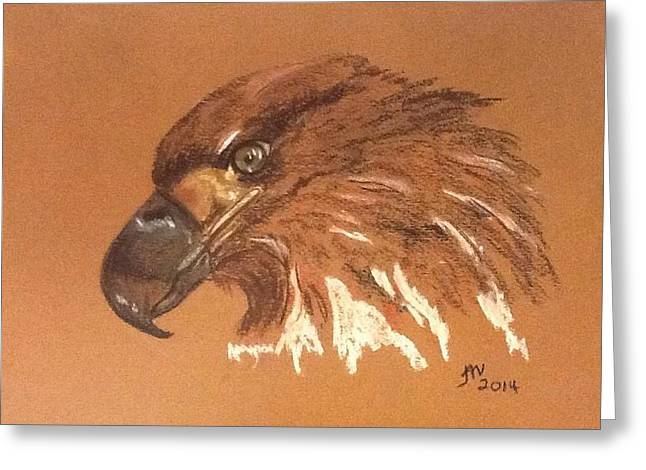 Bald Eagle Pastels Greeting Cards - Juvenile Bald Eagle Greeting Card by Janice Curry
