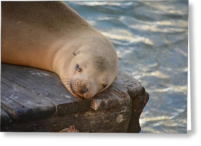 California Sea Lions Greeting Cards - K-Dock Greeting Card by Carolyn Mickulas