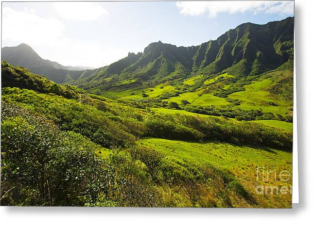 Pastureland Greeting Cards - Kaaawa valley and Kualoa Ranch Greeting Card by Dana Edmunds - Printscapes