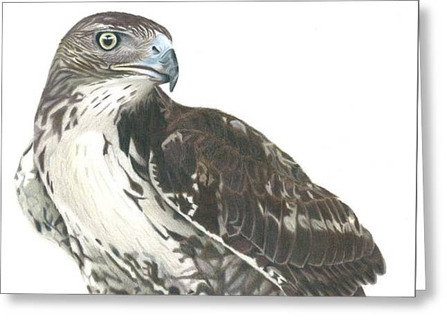 Wild Life Drawings Greeting Cards - Kahleesi Greeting Card by Ronald Sparks