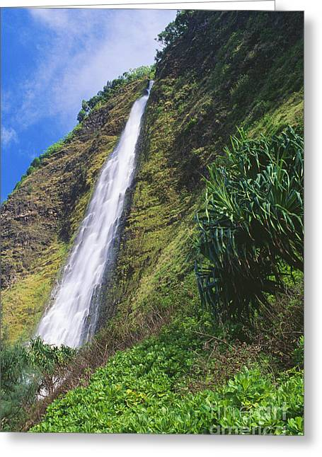 Hamakua Greeting Cards - Kaluahine Falls Greeting Card by Peter French - Printscapes