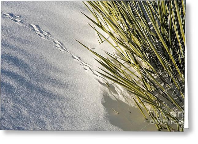 Animal Tracks Greeting Cards - Kangaroo Rat Tracks Greeting Card by Inga Spence
