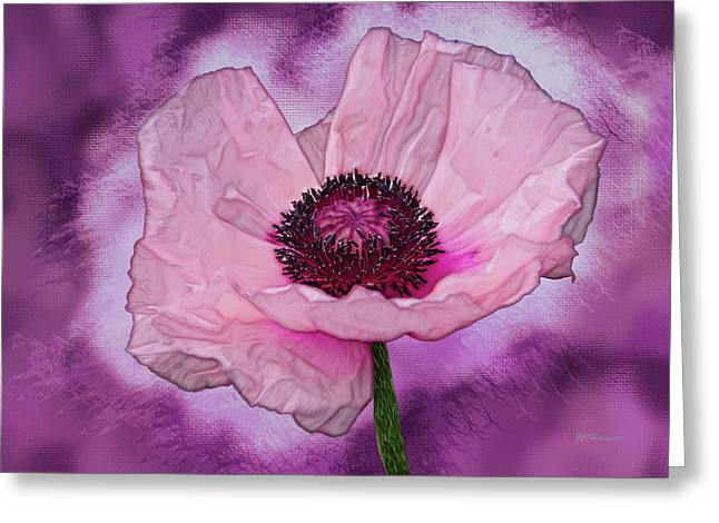 Halinar Greeting Cards - Karinia Poppy Greeting Card by Joe Halinar