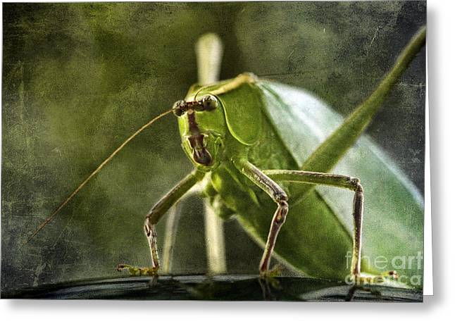 Katydid Greeting Cards - Katydid Greeting Card by Cindi Ressler