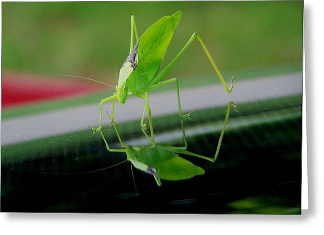 Katydid Greeting Cards - Katydid  Greeting Card by Karen M Scovill
