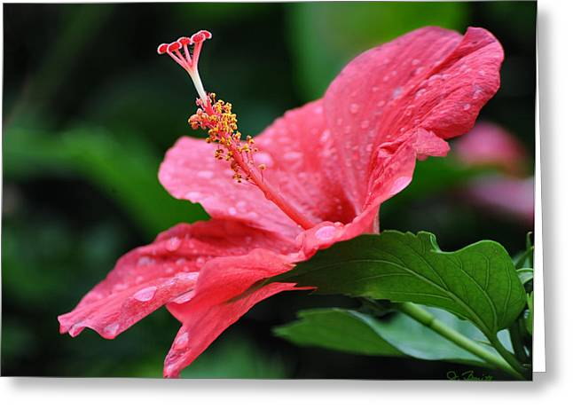Kauai Beauty Greeting Card by Joe Bonita