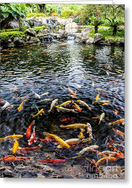 Coy Greeting Cards - Kauai Koi Pond Greeting Card by Darcy Michaelchuk