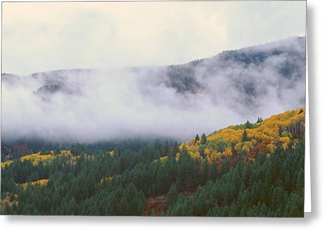 Kebler Pass, Gunnison National Forest Greeting Card by Panoramic Images