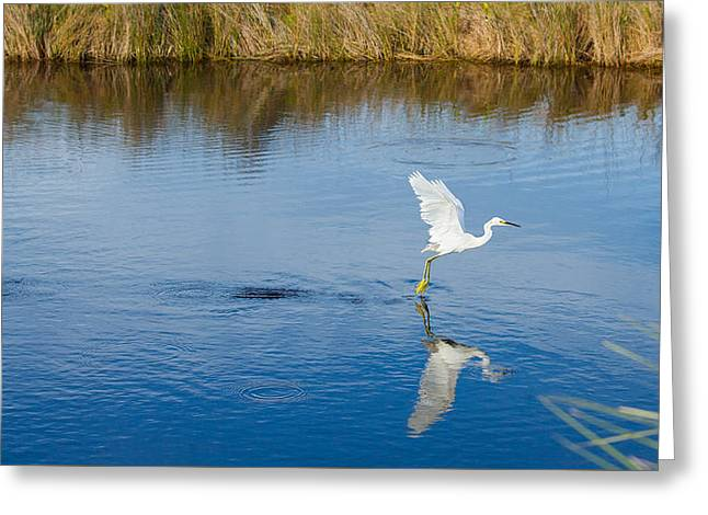Wildlife Refuge. Greeting Cards - Keep Calm and Fish On Greeting Card by John Bailey