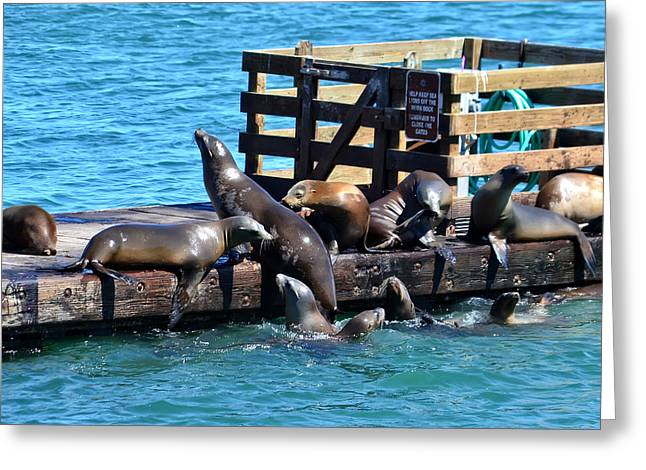 California Sea Lions Greeting Cards - Keep Off the Dock - Sea lions Cant Read Greeting Card by Anthony Murphy