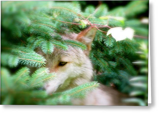 Wolf From The Forest Greeting Cards - Keep Out Of Sight Greeting Card by Debra     Vatalaro