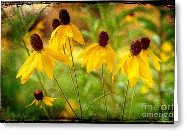 Yellow Coneflower Greeting Cards - Keep The Light During Those Dark Times Greeting Card by Michael Eingle