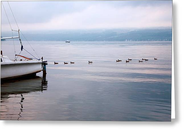 Keep Your Ducks In A Row Greeting Card by Steven Ainsworth